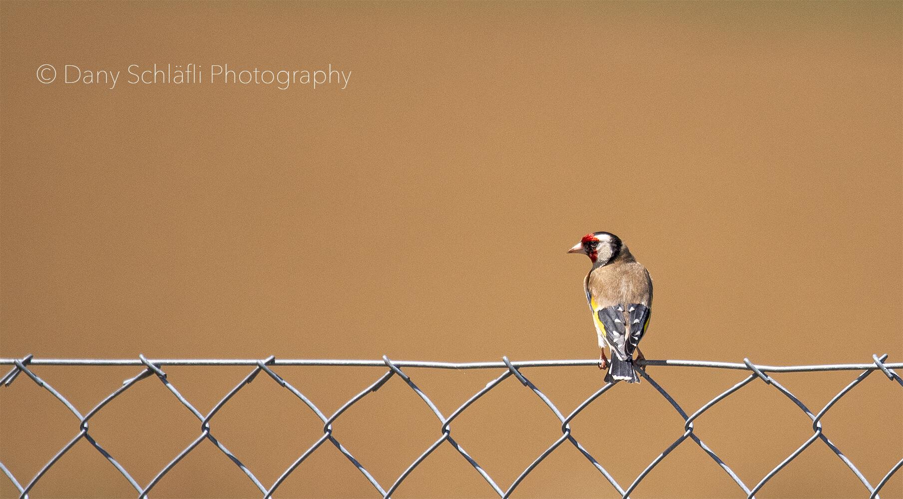 einheimischer Vogel